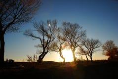 Bomen in de zonneschijn van de vooravond stock foto's