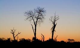 Bomen in de zonsondergang Royalty-vrije Stock Foto