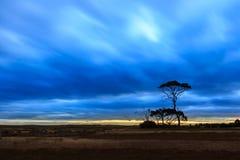 Bomen in de Zonsondergang Royalty-vrije Stock Afbeelding