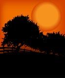 Bomen in de zonsondergang Royalty-vrije Stock Afbeeldingen