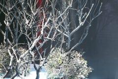 bomen deadwood in het licht met zwarte achtergrond Stock Afbeelding