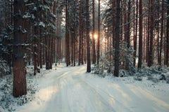 Bomen dicht bos in de winter Stock Foto's