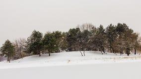 Bomen dichtbij bevroren meer royalty-vrije stock fotografie