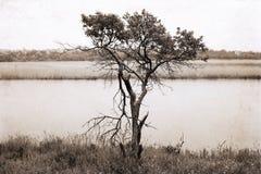 Bomen dichtbij de rivier stock afbeeldingen