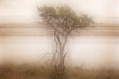 Bomen dichtbij de rivier royalty-vrije stock fotografie