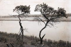 Bomen dichtbij de rivier stock foto's