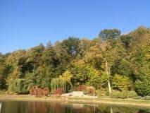 Bomen dichtbij het meer Royalty-vrije Stock Foto's