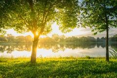 Bomen dichtbij meer en groen gras Stock Foto's