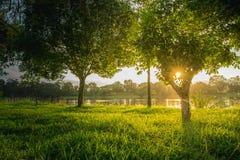 Bomen dichtbij meer en groen gras waar het licht glanst Royalty-vrije Stock Fotografie