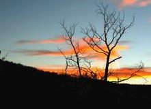 Bomen die bij zonsondergang worden gesilhouetteerd Royalty-vrije Stock Foto