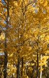 Bomen die Dalingskleuren tonen - Bischop California Royalty-vrije Stock Foto's