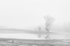 Bomen die in de afstand langzaam verdwijnen Royalty-vrije Stock Foto's