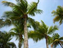 Bomen die in de wind dansen Royalty-vrije Stock Foto