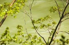 Bomen die in de Wind slingeren royalty-vrije stock afbeeldingen