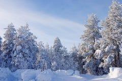 Bomen die door een sneeuw worden behandeld royalty-vrije stock foto's