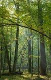 Bomen die door licht worden verlicht Stock Foto