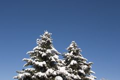Bomen die door sneeuw worden behandeld Stock Afbeelding