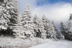 Bomen die door sneeuw worden behandeld stock foto's