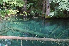 Bomen die in duidelijk water zijn gedaald Royalty-vrije Stock Foto