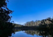 bomen die in een Meer in het midden van het meest forrest, Nieuw Zuid-Wales, Australië nadenken stock fotografie