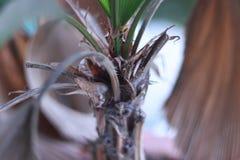 Bomen die in het droge seizoen bijna droog zijn royalty-vrije stock foto's