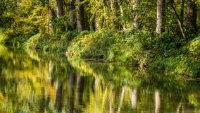 Bomen die in het water nadenken royalty-vrije stock fotografie