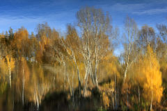Bomen die in het water nadenken. Stock Afbeelding