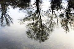 Bomen die in het water nadenken Royalty-vrije Stock Afbeeldingen