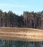 Bomen die in het water nadenken stock foto