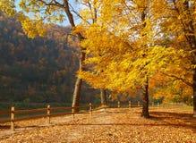 Bomen die kleuren in een park veranderen Stock Foto's