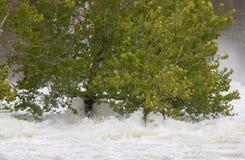 Bomen die langzaam tijdens een vloed worden ontworteld Stock Foto