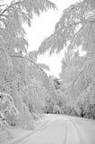 Bomen die met de wintersneeuw worden behandeld Royalty-vrije Stock Fotografie