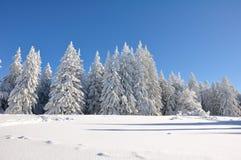 Bomen die met Kerstmissneeuw worden behandeld royalty-vrije stock foto's
