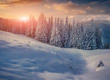 Bomen die met rijp en sneeuw in bergen worden behandeld Stock Foto's