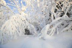 Bomen die met rijp en sneeuw worden behandeld stock foto