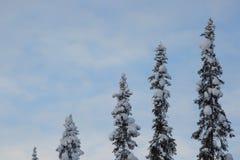 Bomen die met rijp en sneeuw worden behandeld royalty-vrije stock foto's
