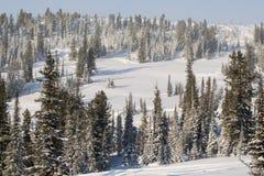 Bomen die met rijp en sneeuw worden behandeld Royalty-vrije Stock Afbeelding