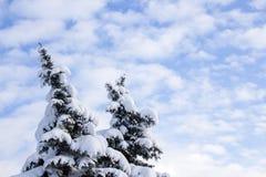 Bomen die met sneeuw in de winter worden behandeld stock fotografie