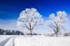 Bomen die met sneeuw tegen de hemel worden behandeld Stock Foto's
