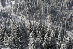 Bomen die met sneeuw worden behandeld stock afbeelding
