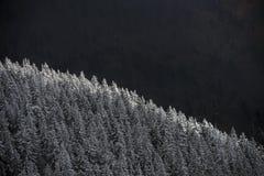 Bomen die met sneeuw worden behandeld stock foto's