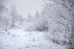Bomen die met sneeuw worden behandeld Royalty-vrije Stock Afbeeldingen