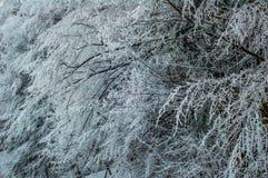 Bomen die met sneeuw worden behandeld Stock Afbeeldingen