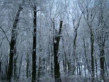 Bomen die met sneeuw worden behandeld Bevroren bos royalty-vrije stock fotografie