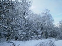 Bomen die met sneeuw worden behandeld Bevroren bos royalty-vrije stock afbeelding