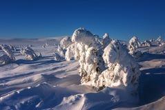 Bomen die met sneeuw worden behandeld royalty-vrije stock foto