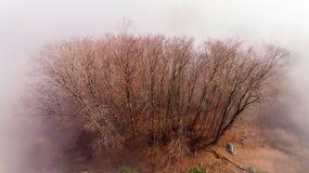 Bomen die in mist in de winter worden verpakt Stock Afbeeldingen