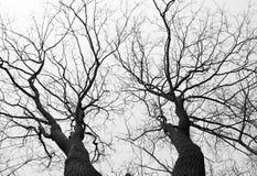 Bomen die omhoog eruit zien stock afbeelding