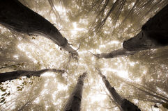 Bomen die omhoog in verrukt bos in de herfst bereiken stock afbeelding