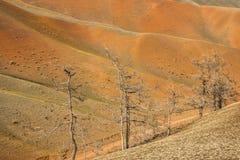 Bomen die op hoge bergheuvel groeien Royalty-vrije Stock Afbeeldingen